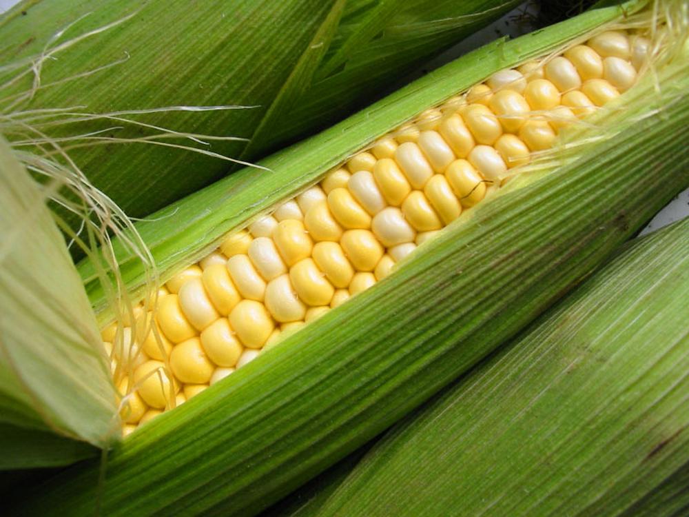 Стоимость кукурузы2017 г май